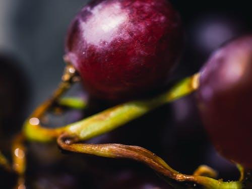 Immagine gratuita di cibo, macro, primo piano, uva