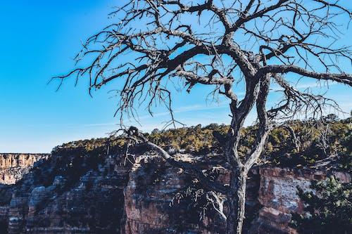 Ingyenes stockfotó Arizona, dombok, fa témában