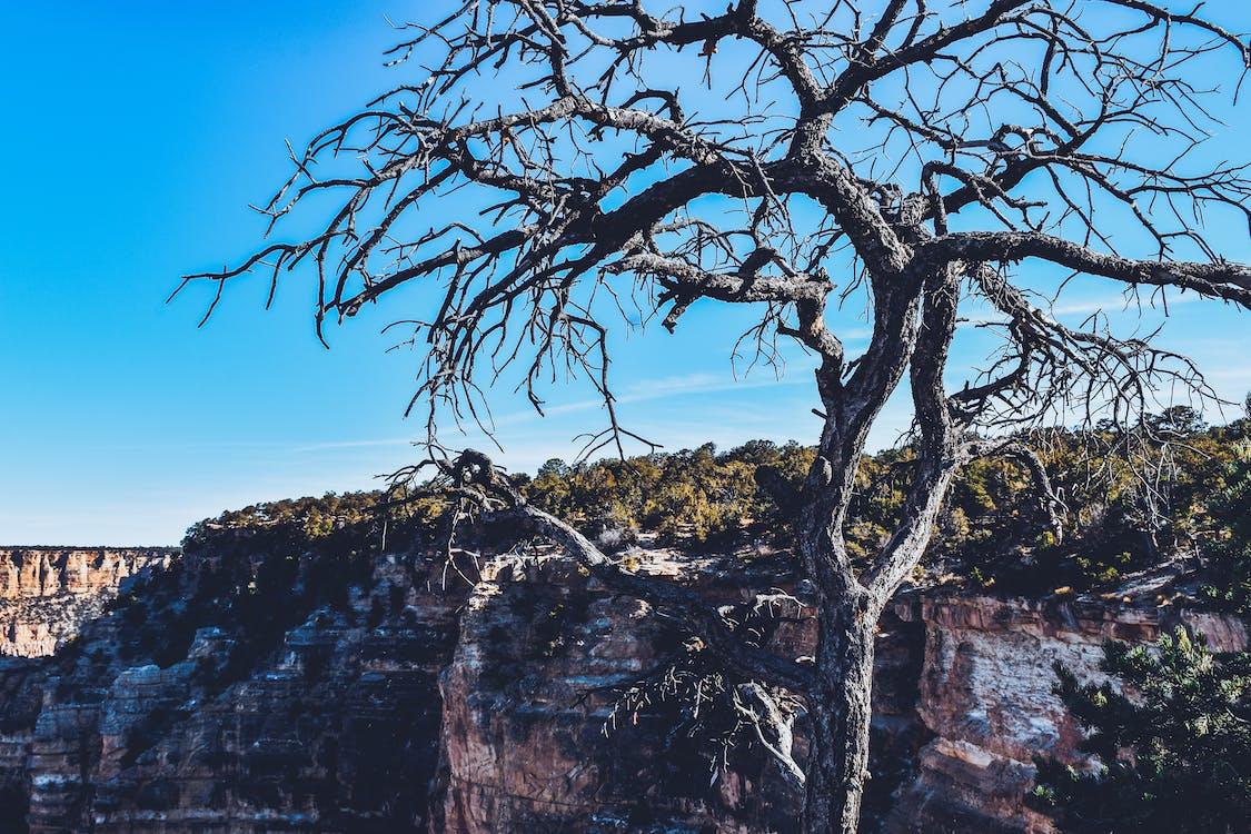Immagine gratuita di albero, arizona, avventura