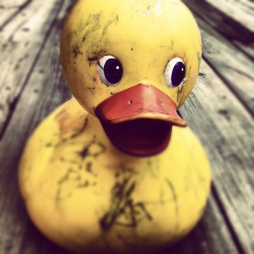 Rubber Duck on Table