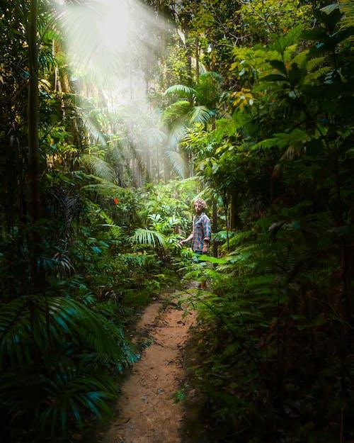 Základová fotografie zdarma na téma bujný, cestování, cestovatel, chodník