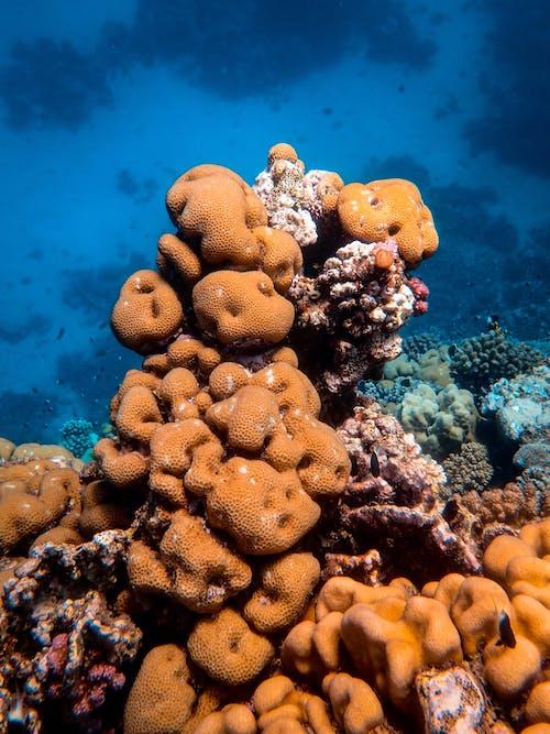Gratis arkivbilde med dyp, hav, korall, koraller