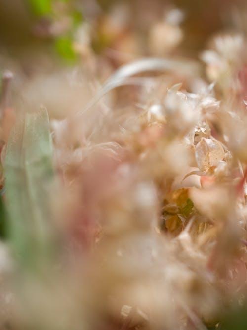Immagine gratuita di astratto, erba, foglie, macro