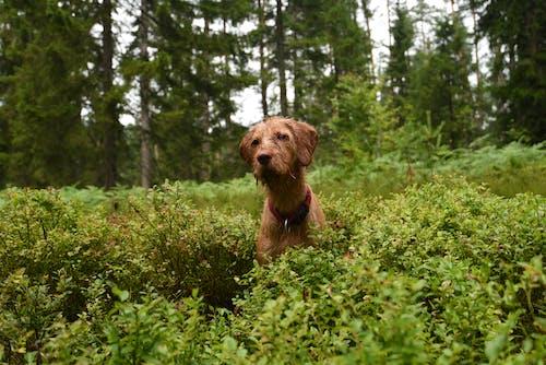 Kostenloses Stock Foto zu #dog, außerorts, blätter, canidae