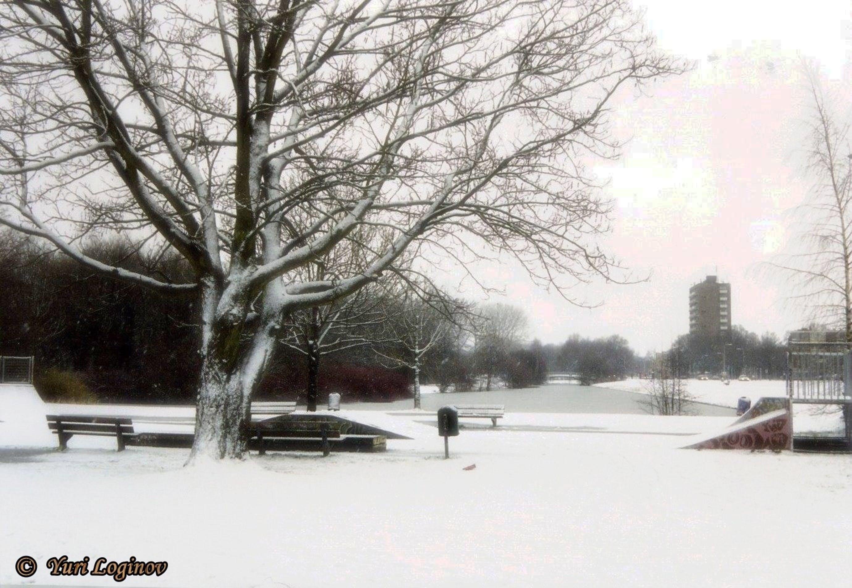 Free stock photo of netherlands, Nederland, zwolle, Park de Wezenlanden