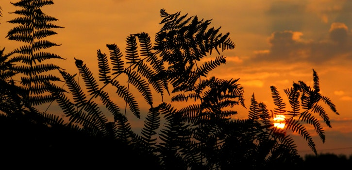 Free stock photo of sunset, sunrise, fern