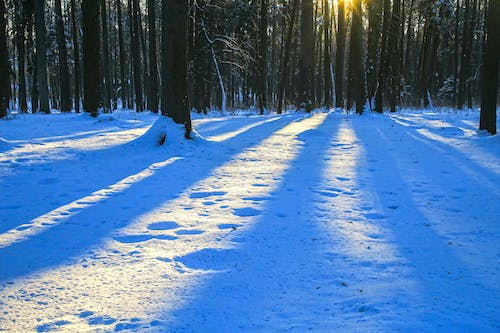 Free stock photo of forest, snow, sunset, sunset color