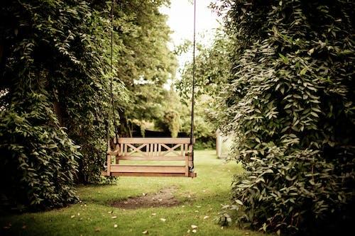 Gratis lagerfoto af bænk, græs, gynge, hængende