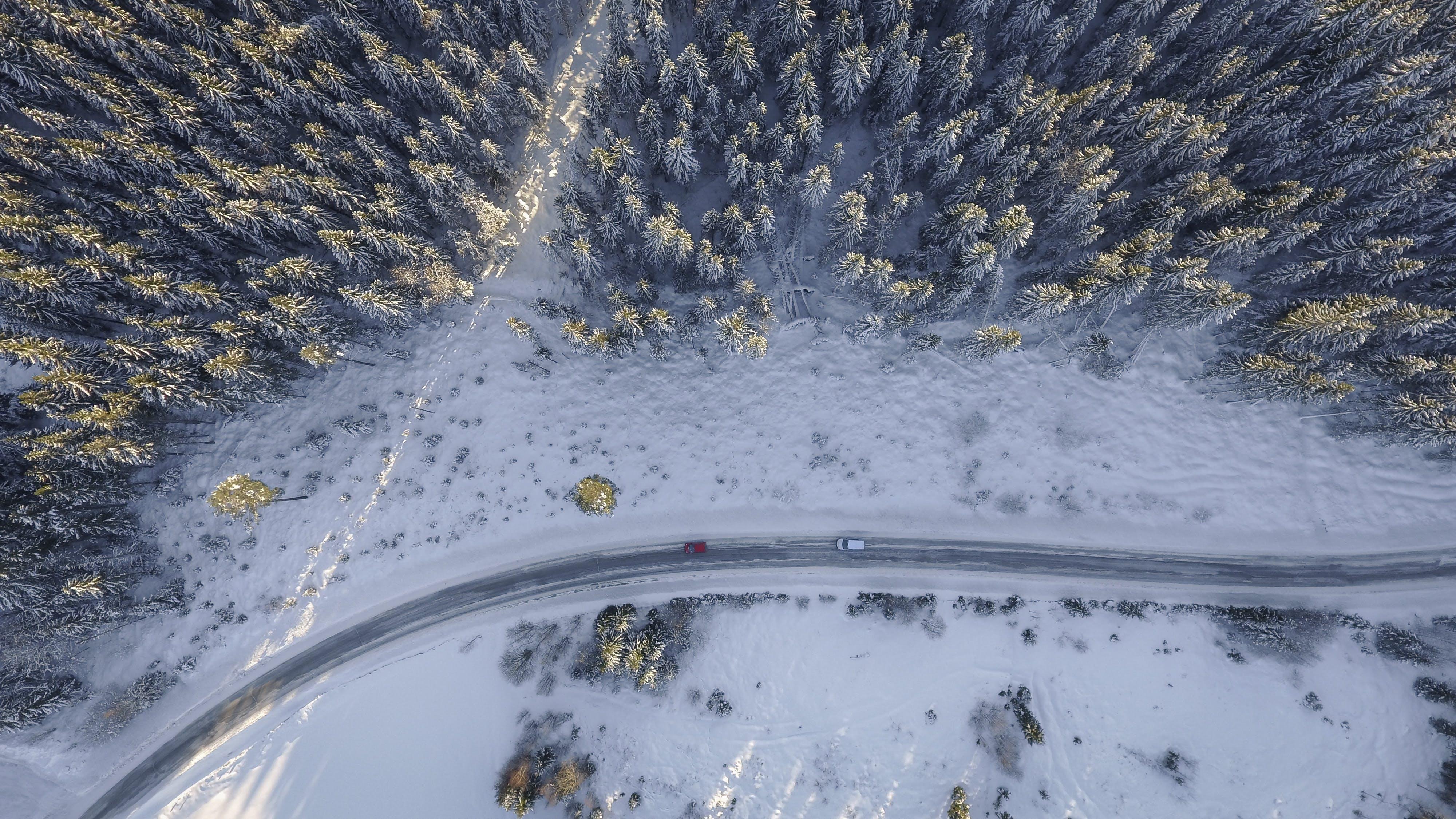 Kostenloses Stock Foto zu abenteuer, autos, bäume, eis