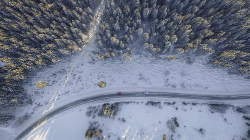 Vehicles on Road Beside Pine Trees Aerial Photography