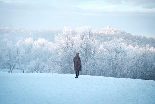 Gratis arkivbilde med landskap, natur, snødekt, tåkete
