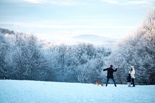 Gratis arkivbilde med familie, forkjølelse, hund, landskap