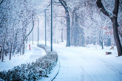 Gratis arkivbilde med forkjølelse, landskap, reise, snø