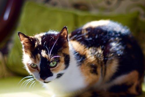 Kostnadsfri bild av grön, katt, pott, sovande