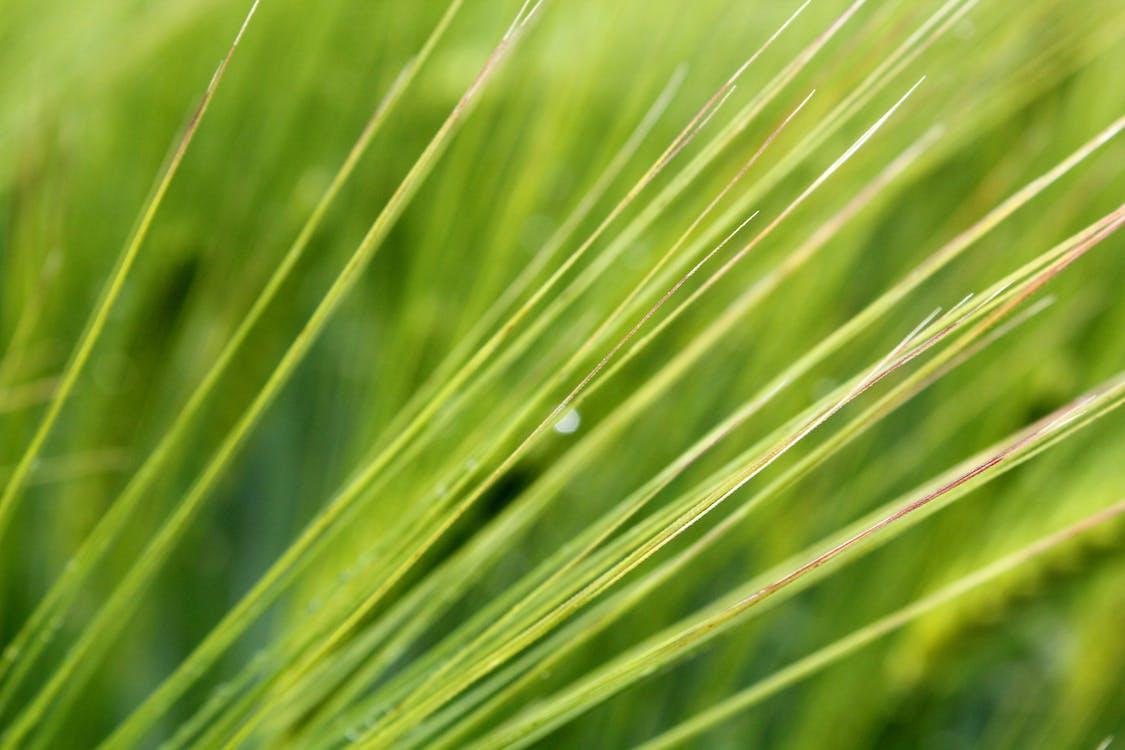 Imagine de stoc gratuită din fotografie de aproape, macro, plantă
