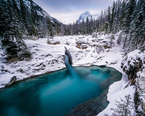 감기, 겨울, 겨울 풍경, 경치가 좋은의 무료 스톡 사진
