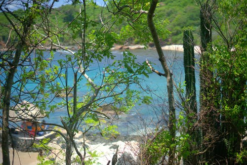Free stock photo of beach, blue water, cactuses, plants