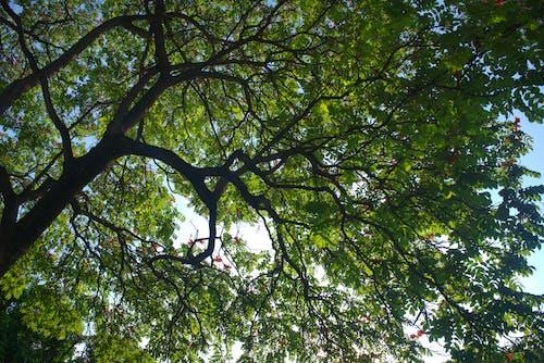 Free stock photo of light, tree