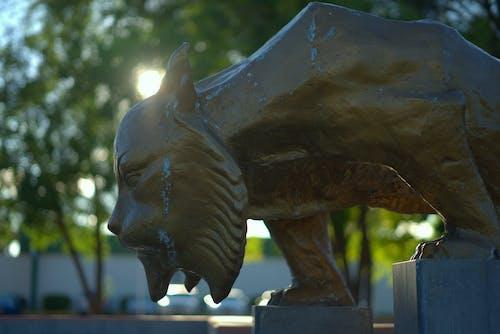 Free stock photo of bokeh, glare, lynx, statue