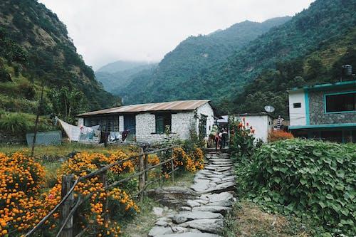 Houses Near Hill