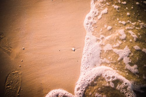 Gratis lagerfoto af havskum, kyst, saltvand, sand