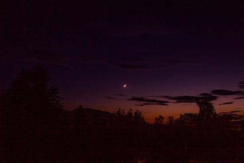 Бесплатное стоковое фото с вечер, деревья, луна, небо