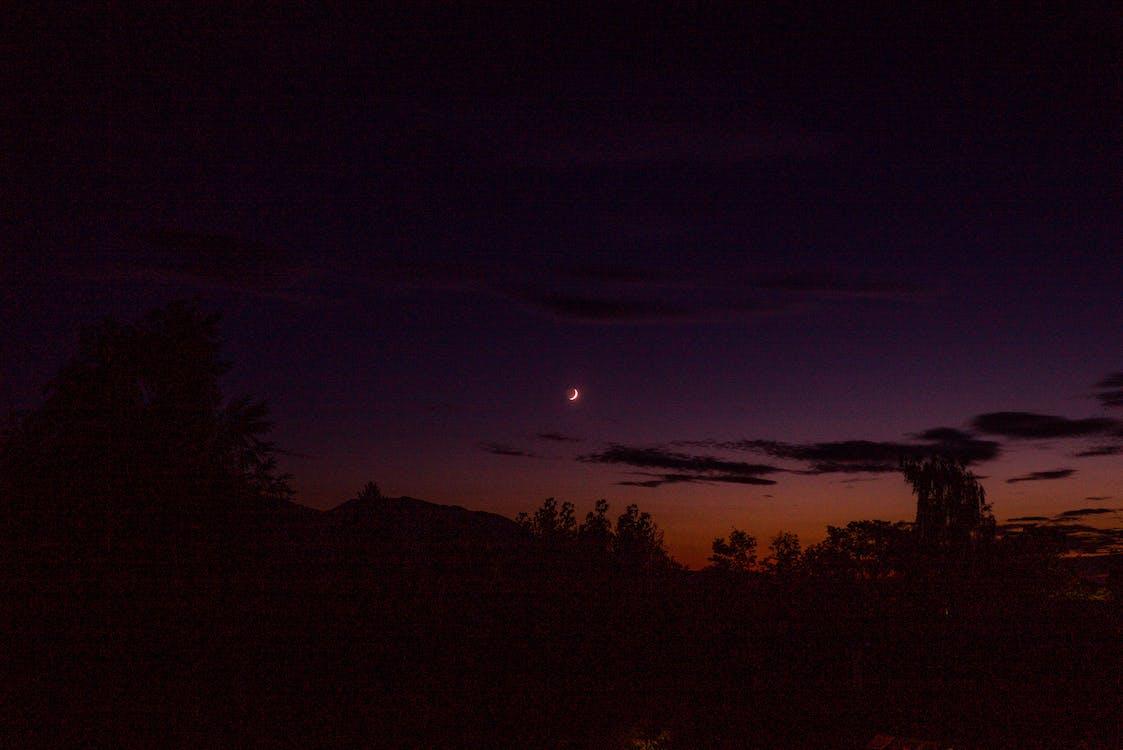 вечір, дерева, місяць