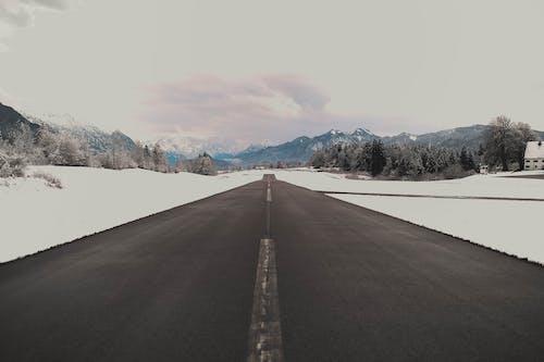 Základová fotografie zdarma na téma asfalt, dálnice, hory, jehličnatý