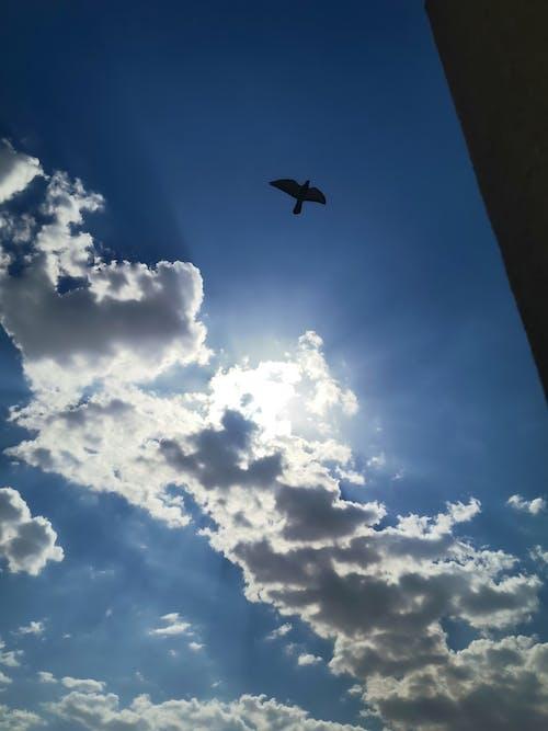 Δωρεάν στοκ φωτογραφιών με γαλάζιος ουρανός, ομορφιά στη φύση, όμορφος, όμορφος ουρανός