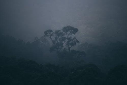 Kostnadsfri bild av bakgrund, blad, djungel