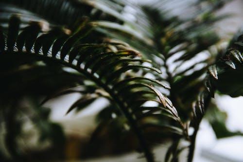 Foto profissional grátis de aumento, borrão, cor, ecológico