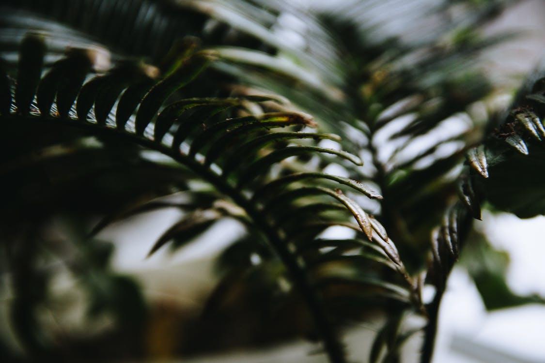 กลางวัน, การเจริญเติบโต, พร่ามัว