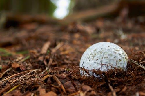 Foto d'estoc gratuïta de brutícia, golf, pilota de golf, rugós