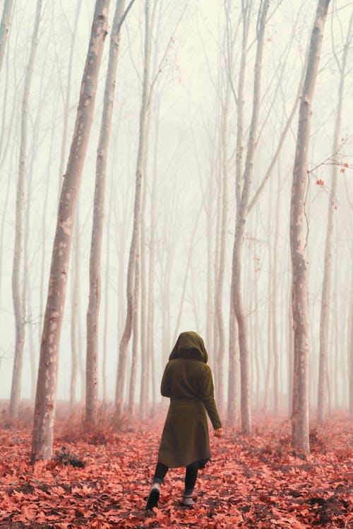 Darmowe zdjęcie z galerii z badać, chodzenie, drzewa, jesienne liście
