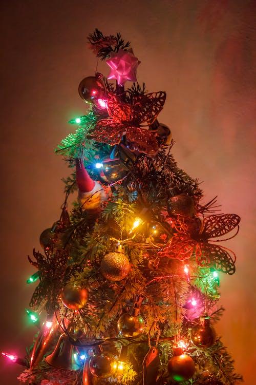 arbol, 纳维达 的 免费素材图片