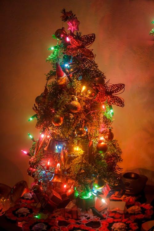 arbol, 納維達 的 免費圖庫相片