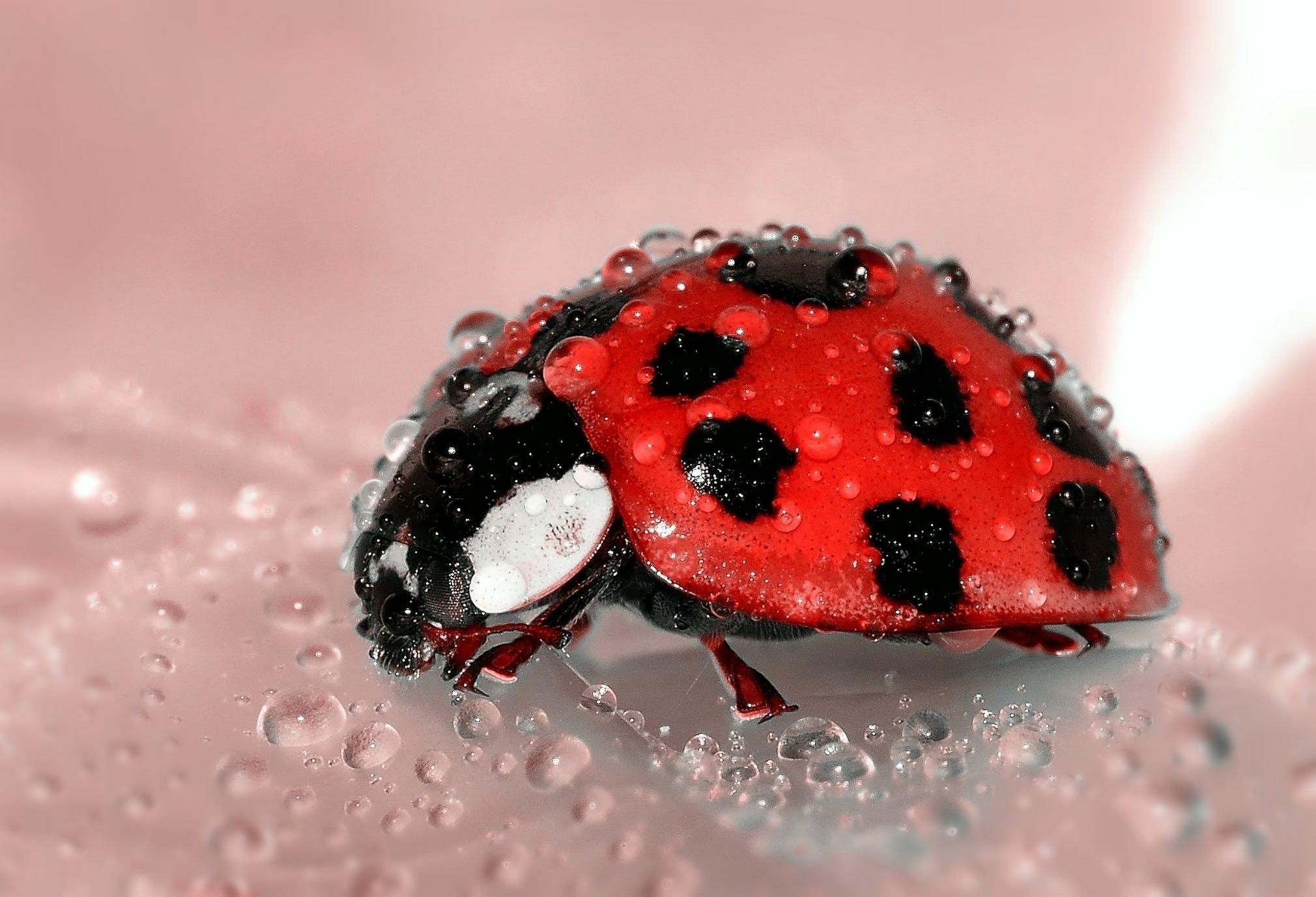 Close Up Photo of Lady Bug