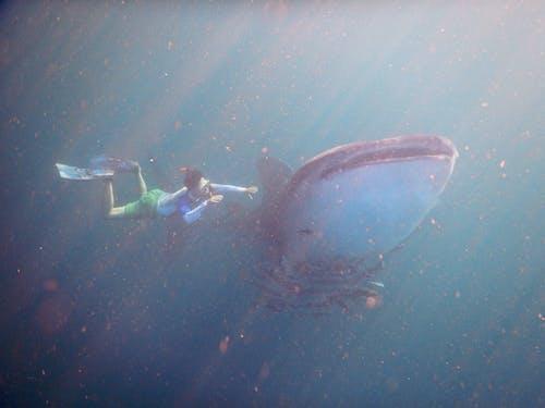 Foto stok gratis air, dalam, di bawah air, eksplorasi