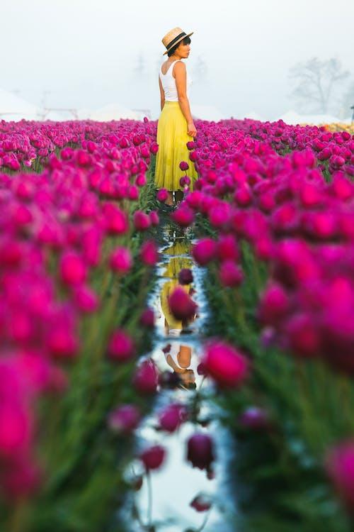 Základová fotografie zdarma na téma červené kytky, červené tulipány, flóra, focení