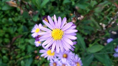 Free stock photo of #mobilechallenge, beautiful flower, flower, flowers