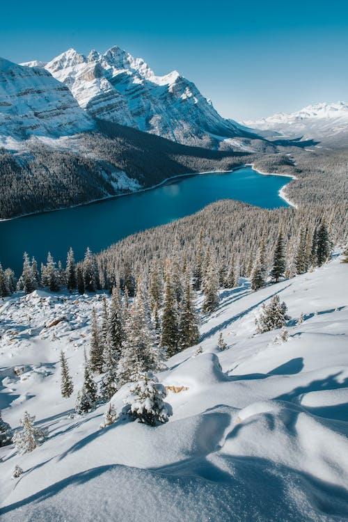 alan, buz tutmuş, buzlu, çam ağaçları içeren Ücretsiz stok fotoğraf