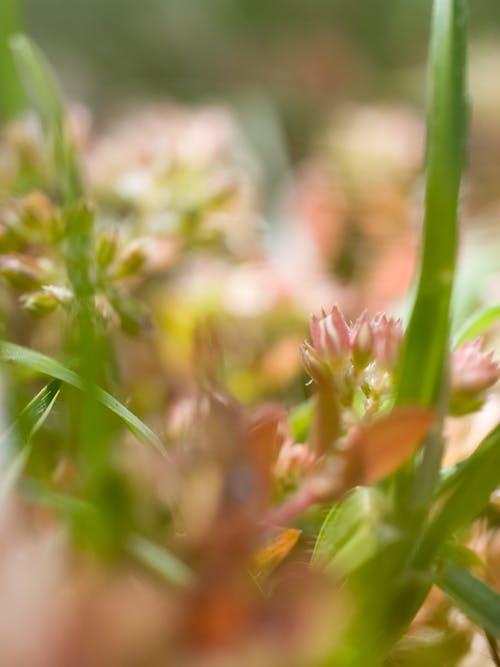 Immagine gratuita di all'aperto, erba, fiori, macro