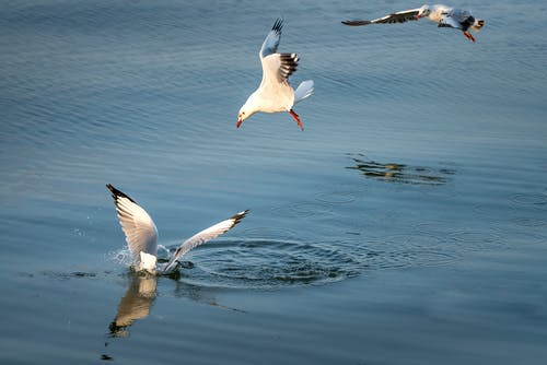 Photo of White Birds Flying Above Body of Water