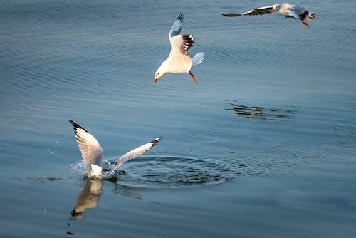 Gratis lagerfoto af dyrefotografering, fjer, fjerdragt, flyve