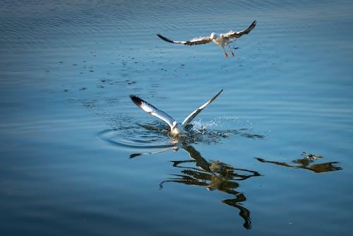 Fotos de stock gratuitas de agua, alas, animales, aves