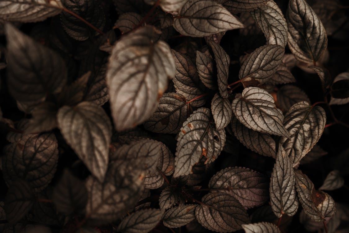Selective Focus Photo of Leaves