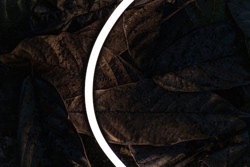 Gratis stockfoto met aarde, achtergrond, behang, Bos