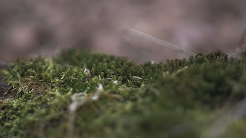 Základová fotografie zdarma na téma hloubka ostrosti, makro, mech, tráva