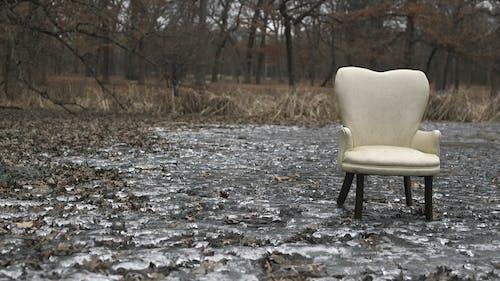 Základová fotografie zdarma na téma led, les, rybník, židle