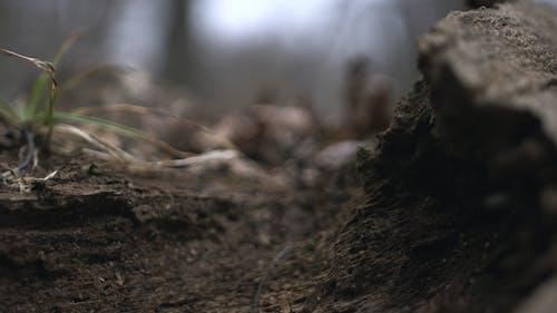 Základová fotografie zdarma na téma dřevo, hloubka ostrosti, strom, tráva